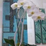 Orchids (Medium)